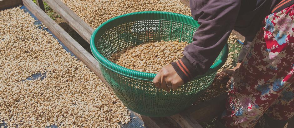 コーヒー豆の乾燥