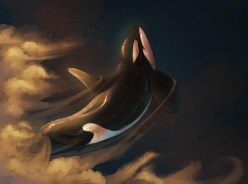 MUERE LA ÚLTIMA ORCA NACIDA EN SEAWORLD