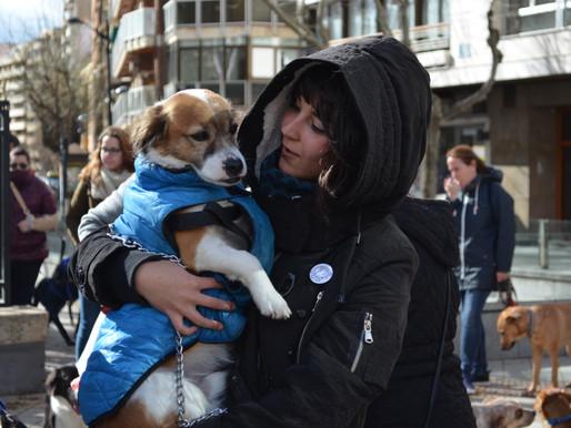 """Manifestación """"No a la caza"""" Albacete"""