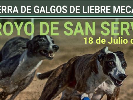 APLAZADA: 18 de Julio en Arroyo de San Serván: Carrera de galgos en tres categorías