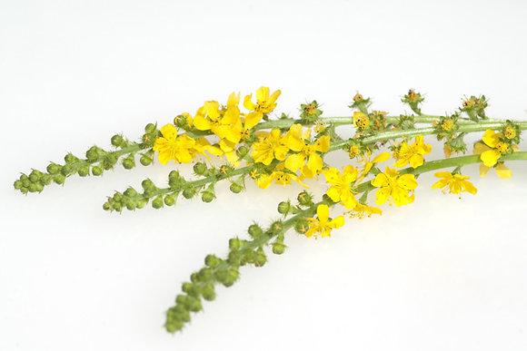 Aigremoine Plante BIO