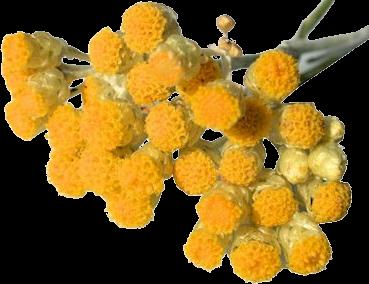 Eau Florale - Hélichryse BIO 200ml