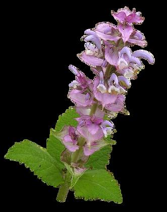 Eau Florale - Sauge Sclarée BIO 200ml