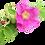 Thumbnail: Huile Végétale - Rose Musquée BIO