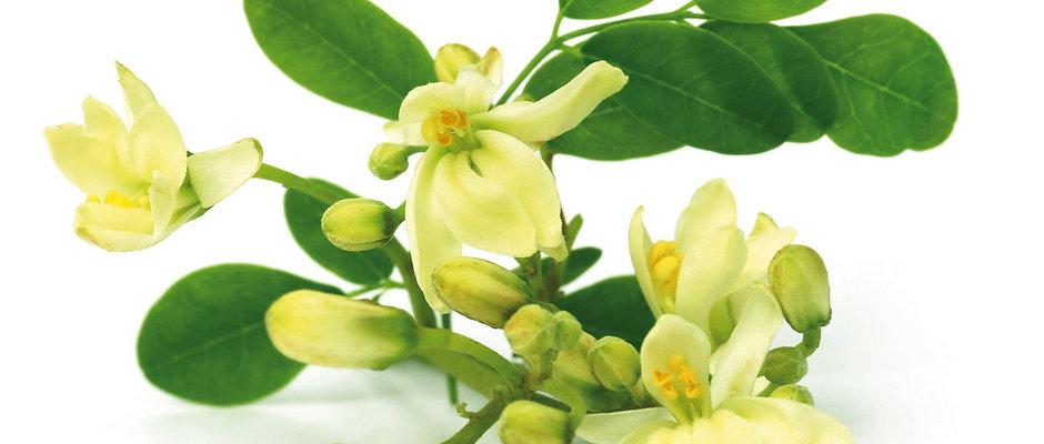 Eau Florale - Moringa