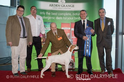 Top Scottish Gundog 2016 - Pointer with Arden Grange Sponsers