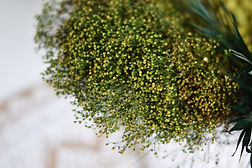 preserved plant