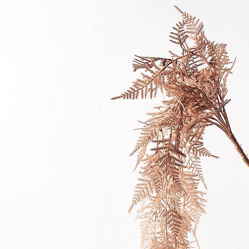 Asparagus Plumosus Coffee artificial