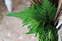 preserved fern