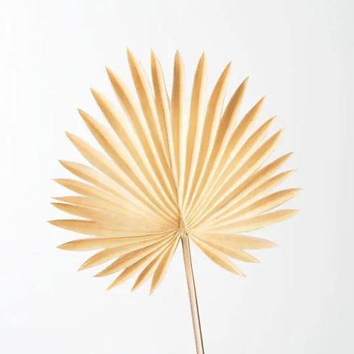Palm Fan Natural