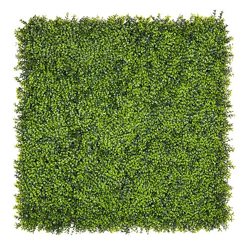 Boxwoo green wall