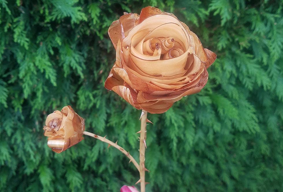 Hearth Rose