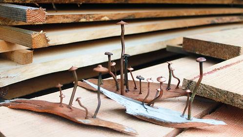 Copper cap mushrooms wood stack.jpg