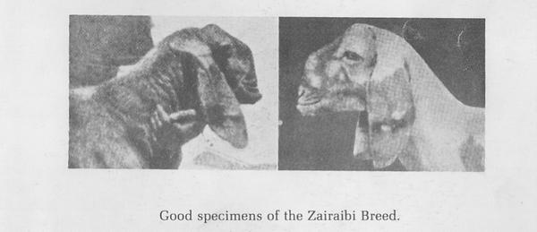Зайраби goats.png