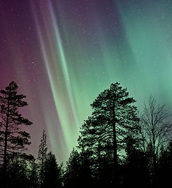 The Northern Lights above a forest of fir trees