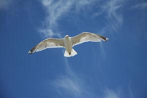 Bird flying free