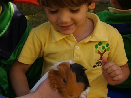 Visita de conejos y cuyos en preescolar y primaria.