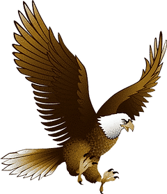eagle-png-eagle-png-image-with-transpare