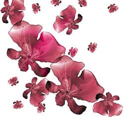 fleur-B-compo-1.jpg