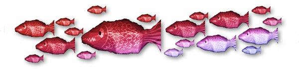 Ribanbelle de poissons