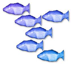 poisson-droite-3-I.jpg