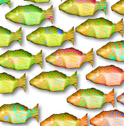 poisson-2c.jpg