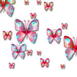 Papillons 1