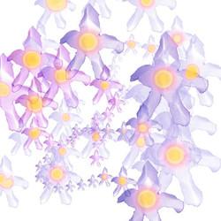 iris-C-I.jpg