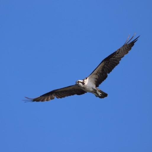 Speaker's Series: Migratory Birds- Greg Butcher
