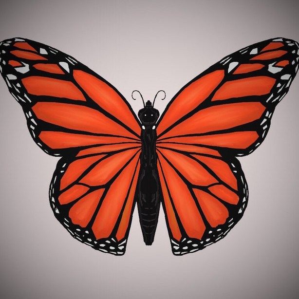 150 - Orange Butterfly - 1000x750.JPEG