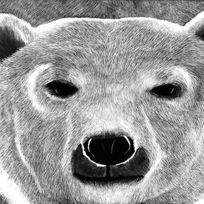 154 - Bear - 2100x1500.JPG