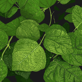 142 - Green Leaves - 2100x1500.jpg