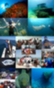 2017 we be diving.jpg