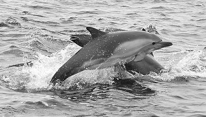 closeupDolphins' Life .JPG