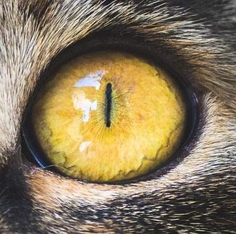 cat eye_edited.jpg