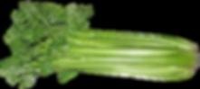 celery.png