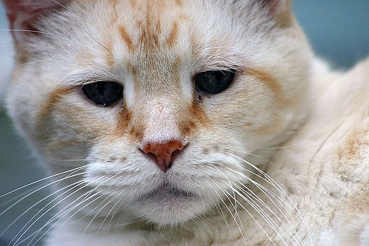 senior cat.jpg