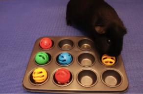 Indoor Activities with your Pets