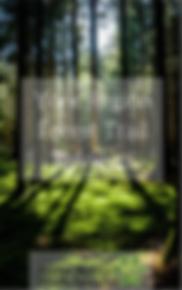 York Region Forest Trails eBook