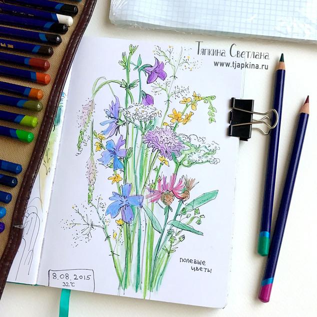 Скетч, полевые цветы