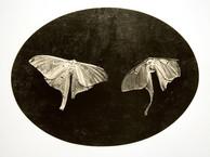11. Soulmate Moths.jpg