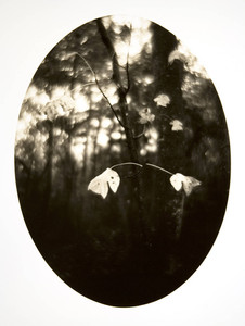 24. Last Leaves.jpg