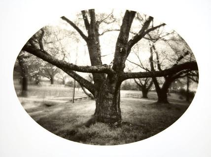 14. Family Tree.jpg