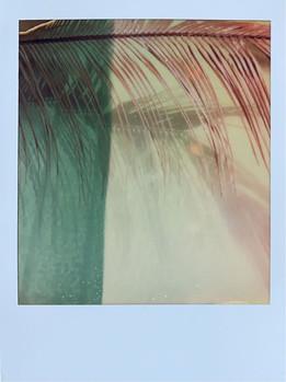 Serie: Palm