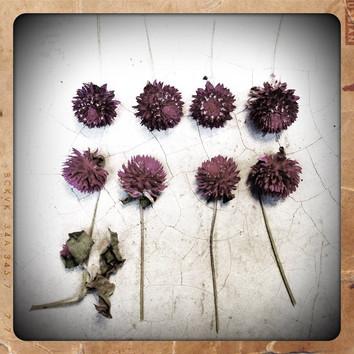 Serie: Botánica