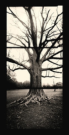 10. Tree-in-Winter-82x42 .jpg