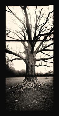 10. Tree-in-Winter-82x42 .jpg