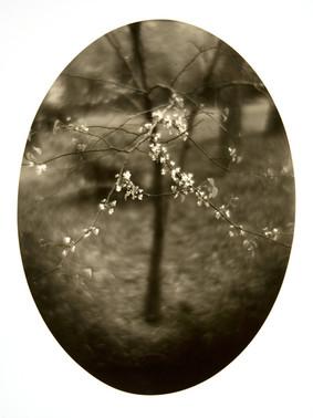 16. Spring.jpg