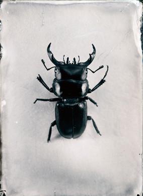 "Serie ""Natura"""