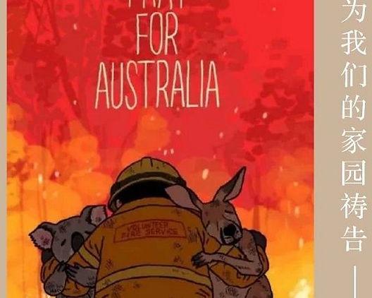 为澳洲山林大火募捐